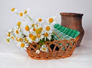 daisies-314